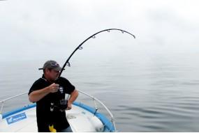 Tuna Stand Up spinning